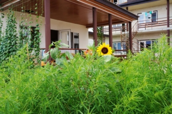 Guest House Polli